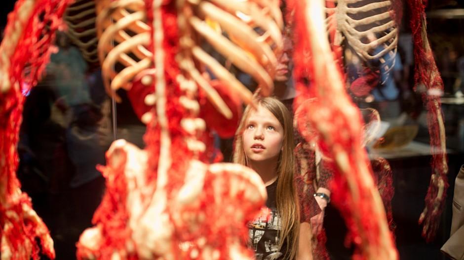 Körperwelten: 90'000 Personen besuchen die Ausstellung