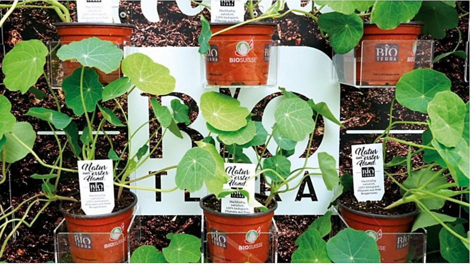 Pop Creative Services: Blühende Plakatwände für Bioterra