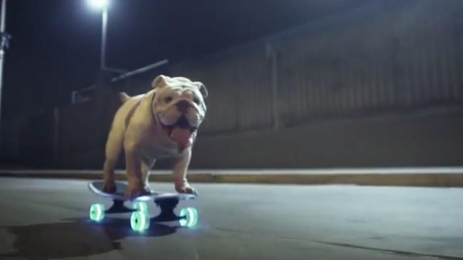 Farner: Bulldog saust durch die Nacht
