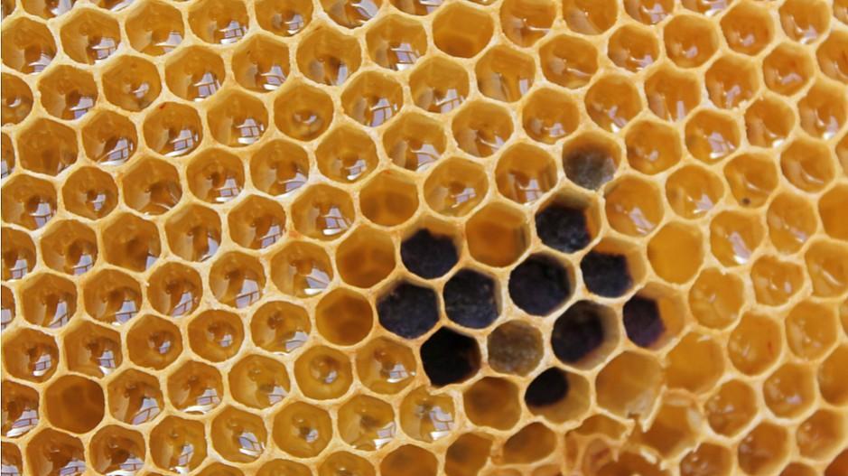 Microbee: Ein Match über das Bienenhaus hinaus