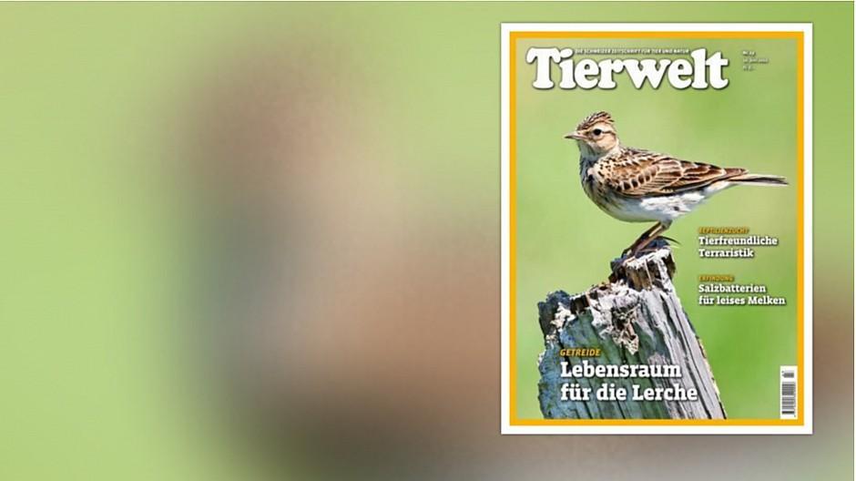Tierwelt: Fachzeitschrift mit neuer Besitzerin