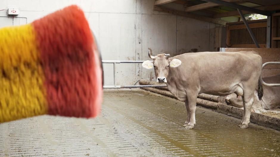 Thjnk Zürich: Fernmassage für Bio-Kühe auf Knopfdruck