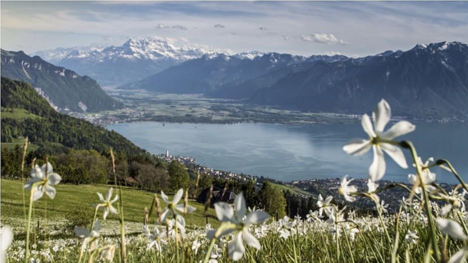 Webrepublic: Mandat von Schweiz Tourismus verteidigt