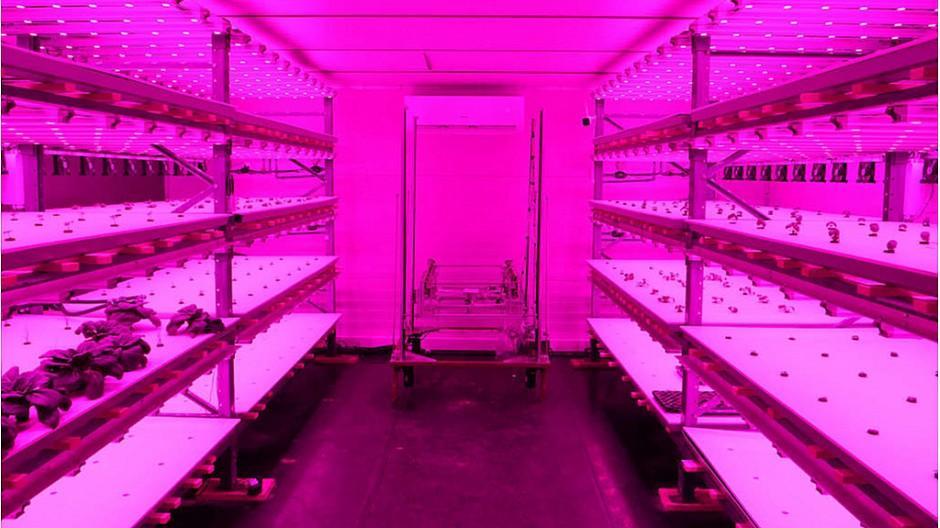 Vertical Farming: Migros Basel und Growcer lancieren Projekt