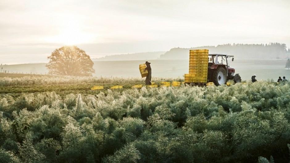 Virtue Switzerland: Pitch um Naturaplan-Etat gewonnen