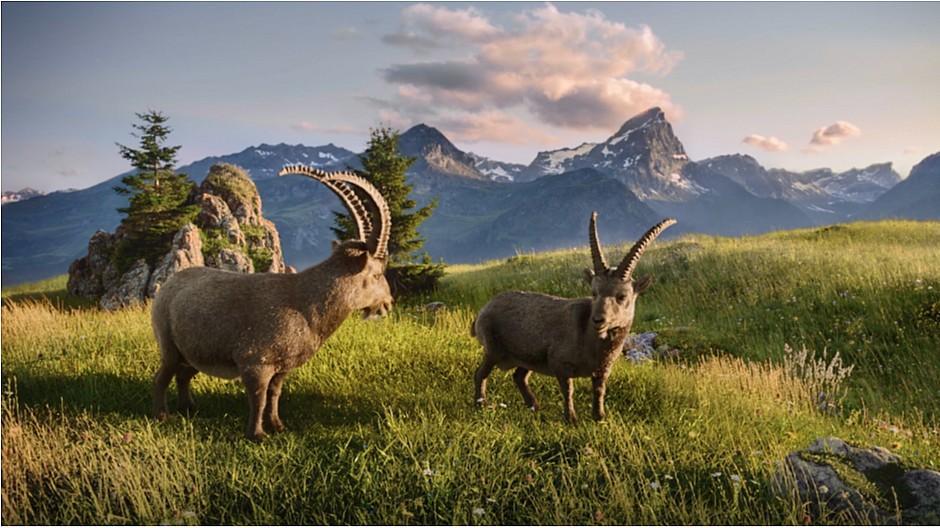 Gian und Giachen: Steinböcke werben für Graubünden mal anders