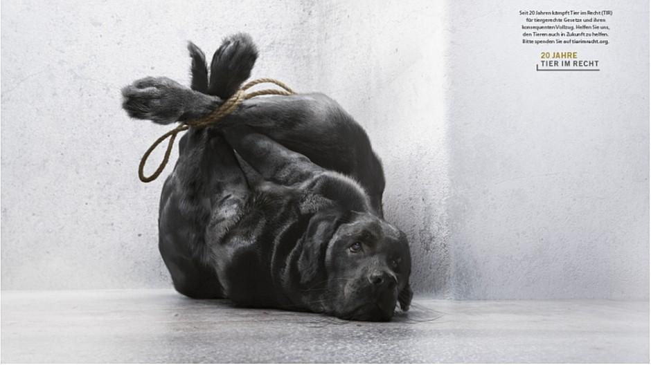 Ruf Lanz: Jubiläumskampagne für 20 Jahre Tier im Recht