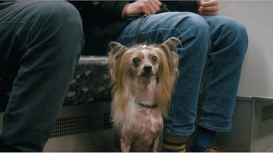 Walker: Wenn Pendler auf den Hund kommen