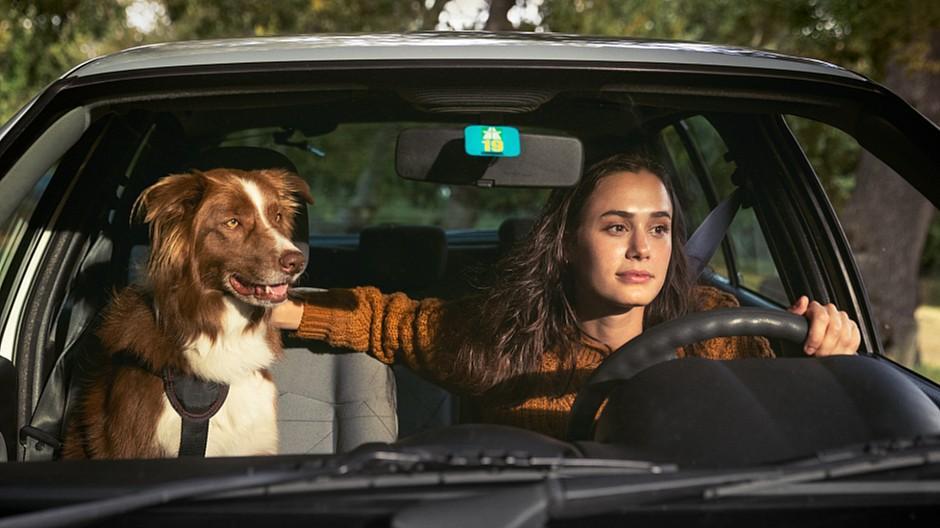 Freundliche Grüsse: Was im Auto alles so passiert