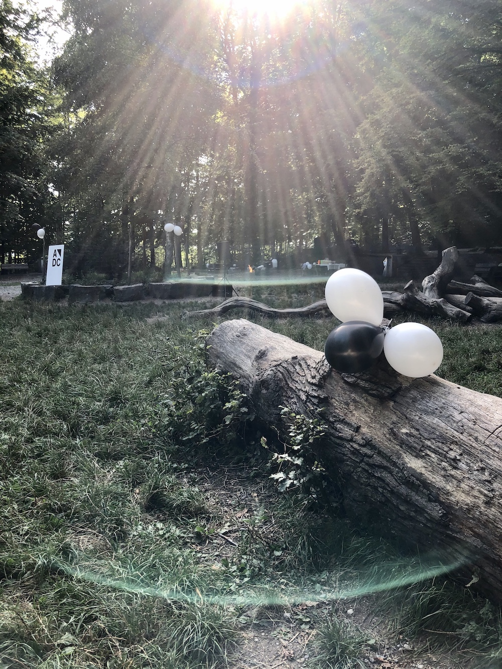 Die Waldlichtung